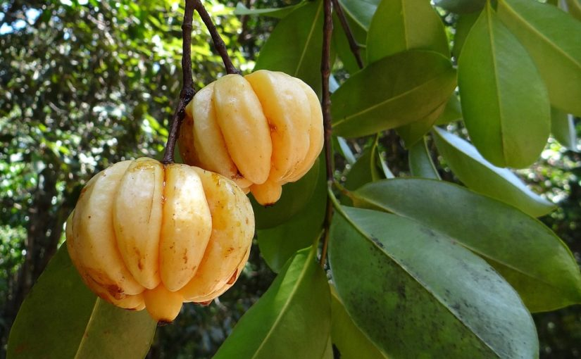 Garcinia Cambogia- Its Benefits