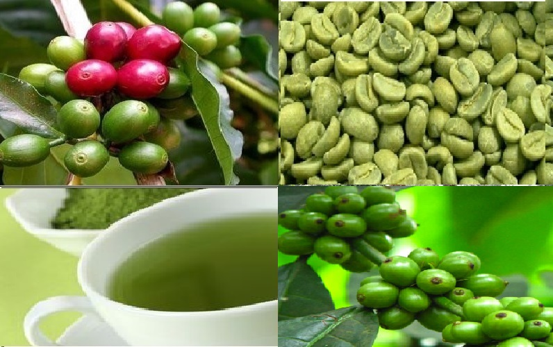 Green Coffee Beans Trigger Weight Loss- Fact or Fiction
