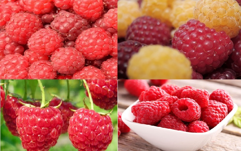 How Raspberry Ketones Help In Weight Loss